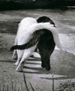 empatia entre gatos