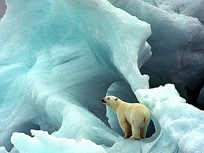 polar_bear_glacier
