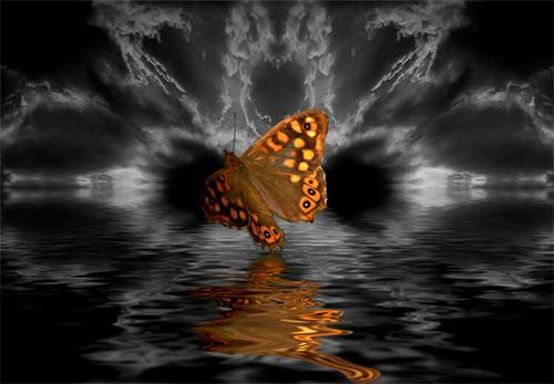 voo da borboleta