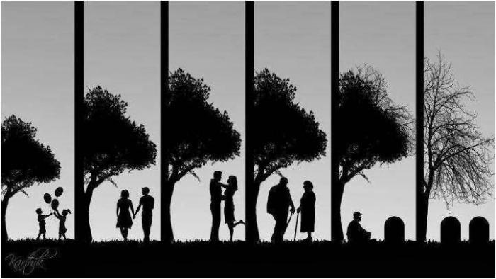 ciclos-de-vida